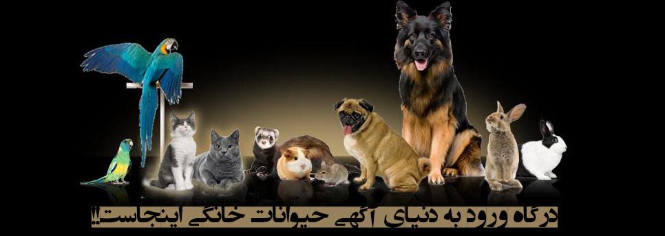 لینک درگاه آگهی حیوانات خانگی