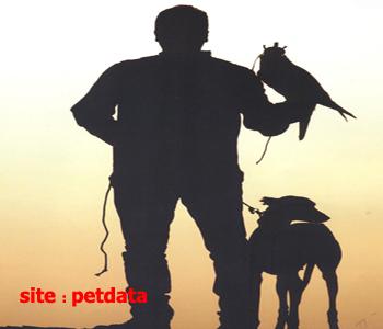 آموزش حیوانات