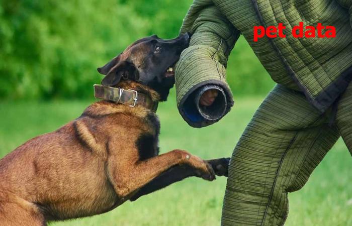 نام و تلفن تماس مربیان تربیت سگ