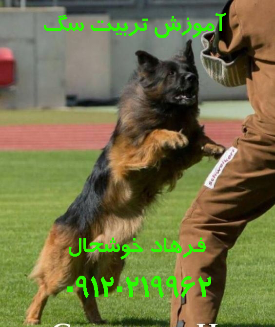 مربی تربیت سگ فرهاد خوشحال